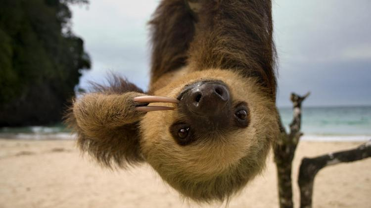 sloth-beach-upside-down.ngsversion.1396530757113.adapt.1900.1